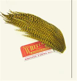 Whiting Woolly Bugger Packs