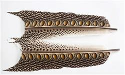 Argus Pheasant Tail sections