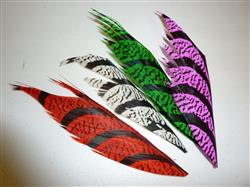 Lady Amherst Tail Feathers PIECES