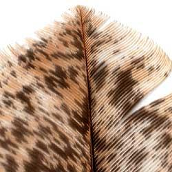 Mottled Turkey Quills Natural select pair